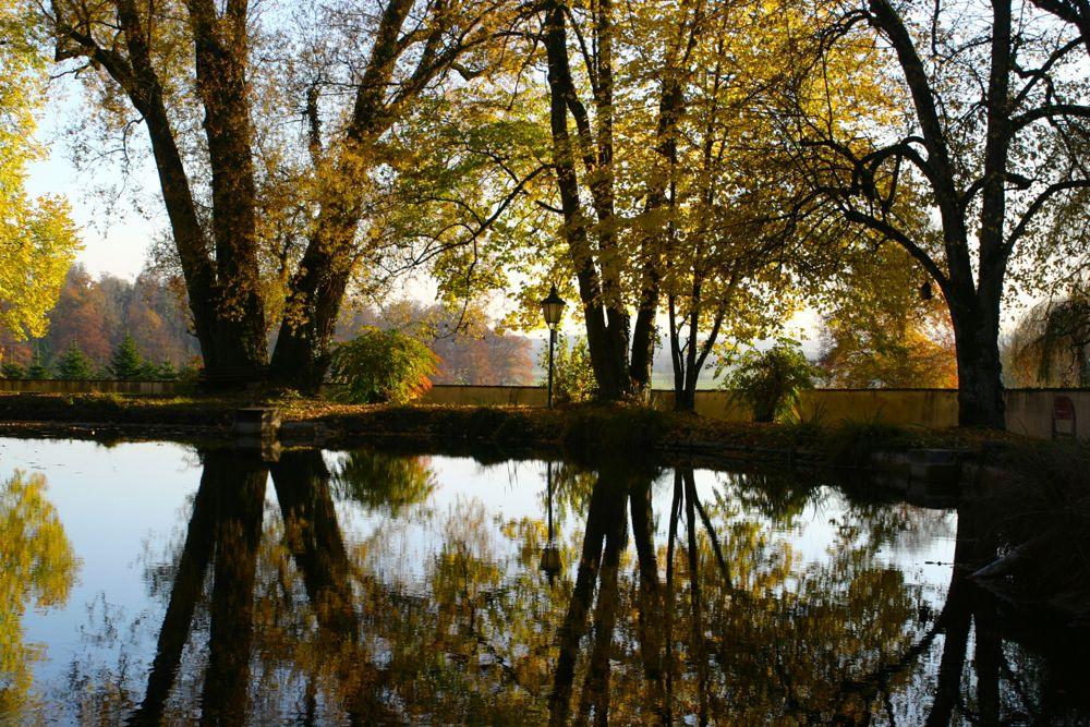 reflections on autumn.jpg