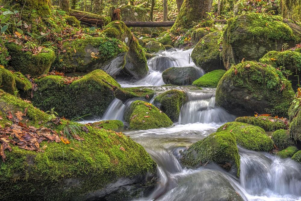 river moss.jpg