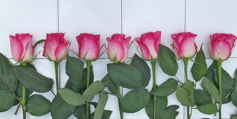 rose-tiles sz.jpg