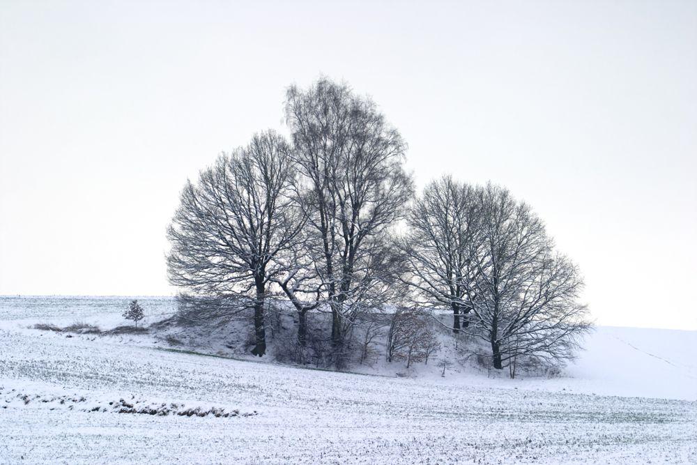 Rothenberg.jpg