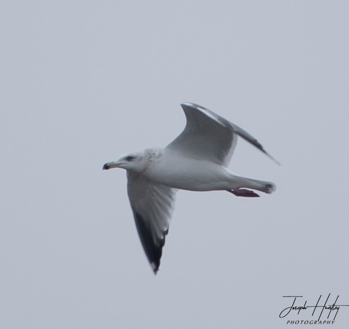 Seagull-0857.jpg