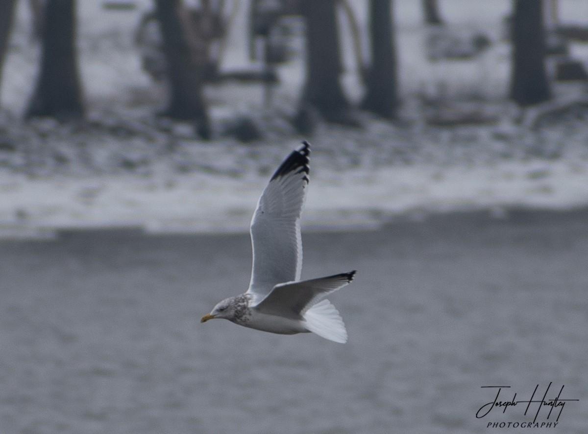 Seagull-0919.jpg