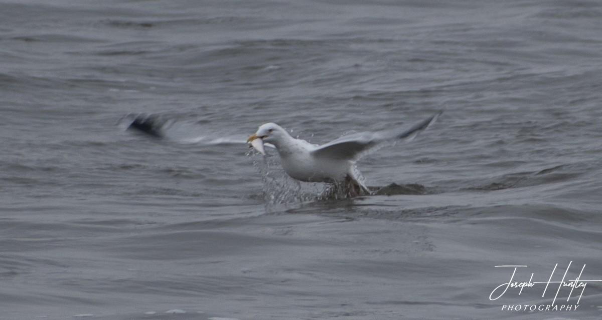 Seagull-0923.jpg