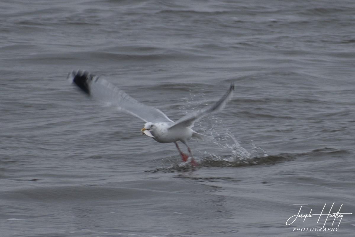 Seagull-0924.jpg