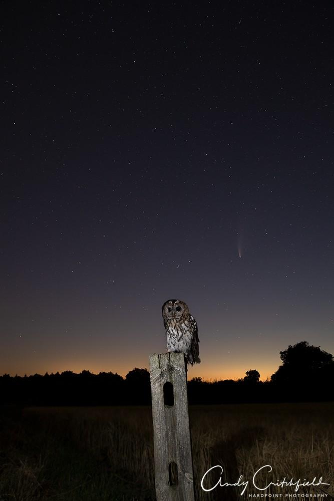 sharp stars_NDY7178 small copyright.jpg