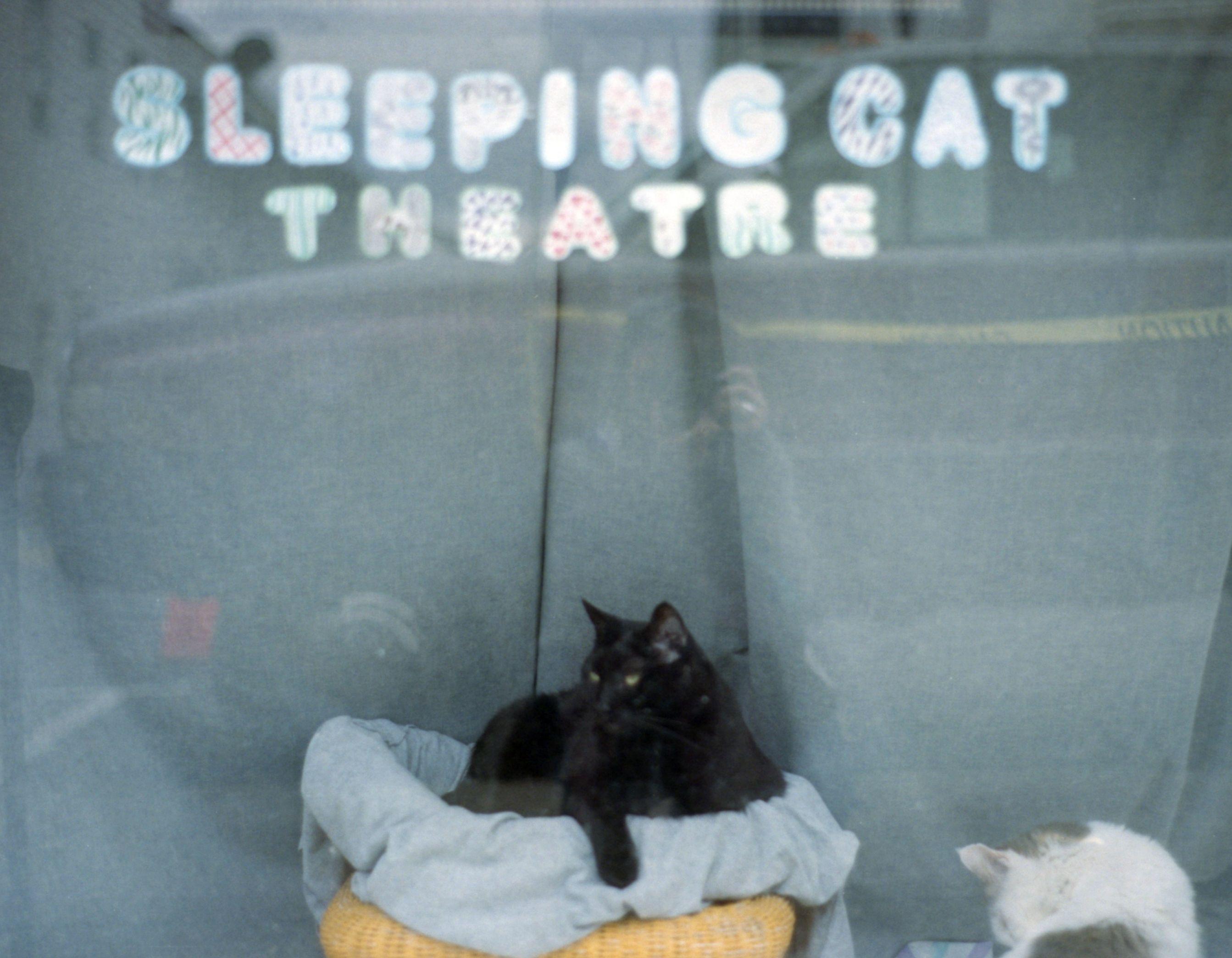 Sleeping cat theater.jpg