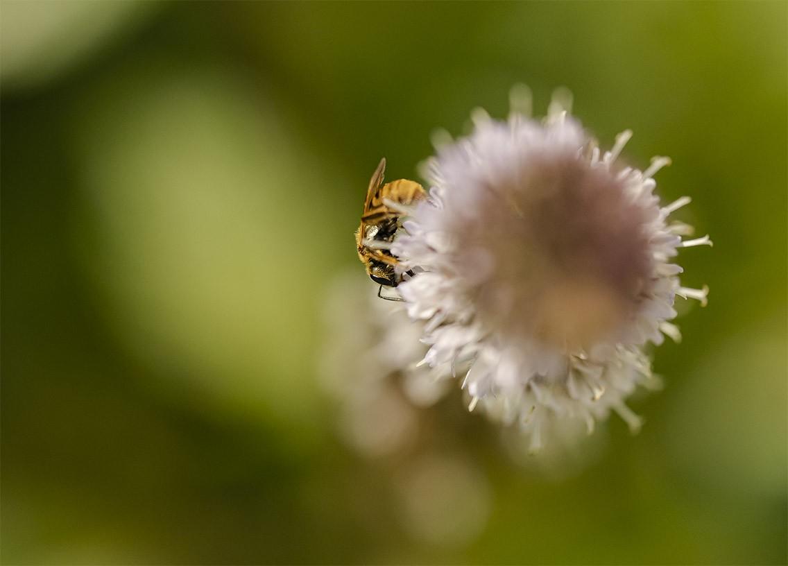 small bee sm.jpg