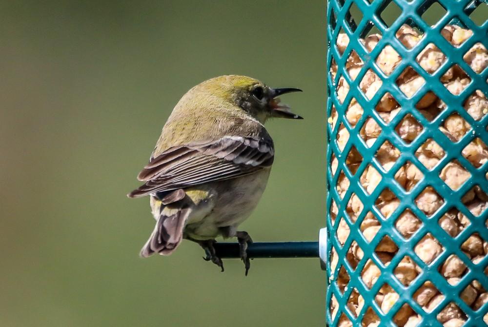 Small Bird 1 (1 of 1).jpg