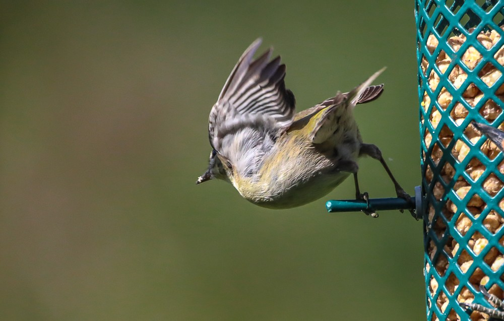 Small Bird 3 (1 of 1).jpg