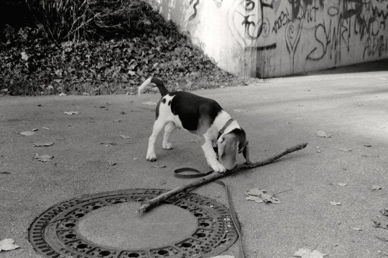 small dog, big stick 1.jpg