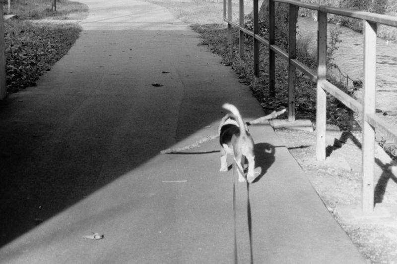 small dog, big stick 2.jpg