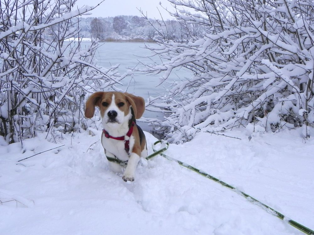 snowy toby.jpg