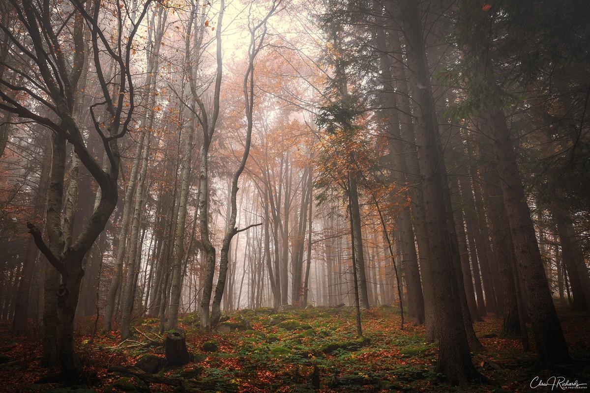 Souls_Of_The_Forest_Fog.jpg