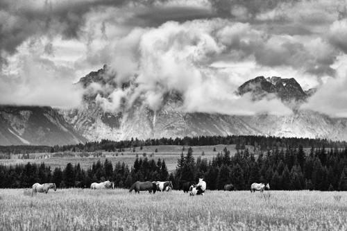 sparky image 3 Grazing Herd.jpg