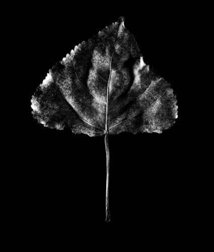 sparky image 6 Leaf in Suspension.jpg