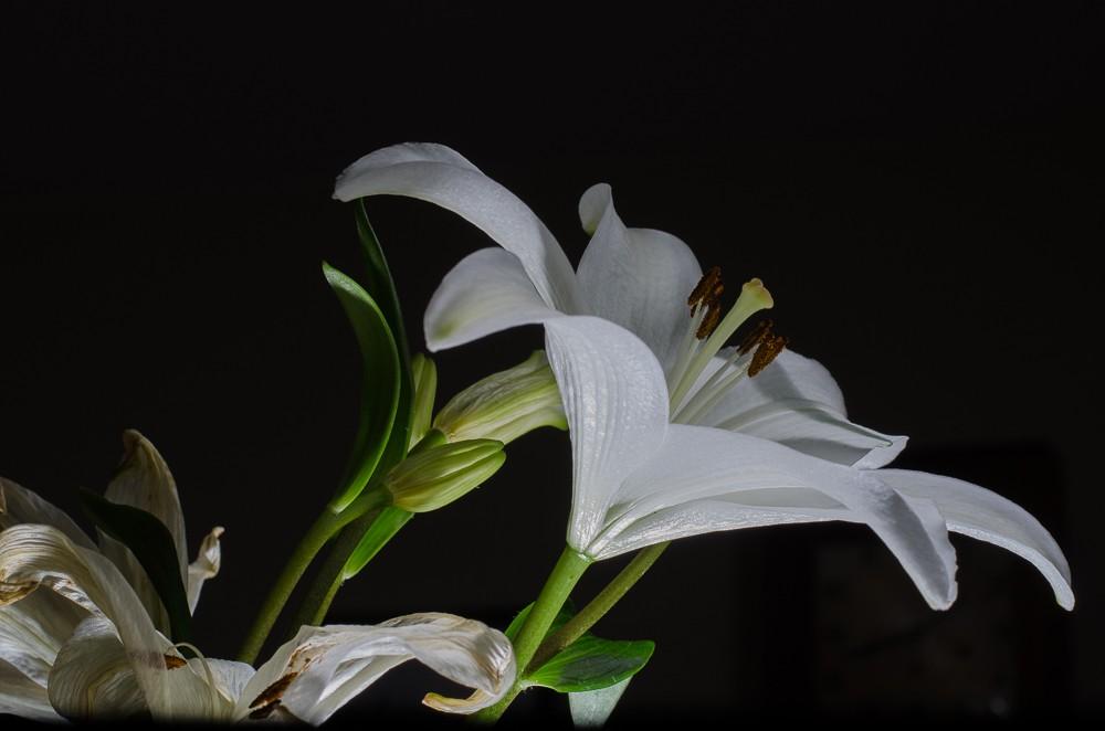 Speedlit Lily-1-2.jpg