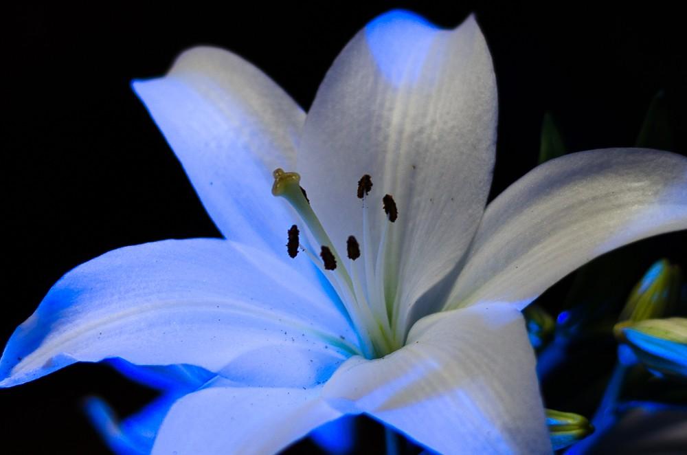 Speedlit Lily-1-3.jpg