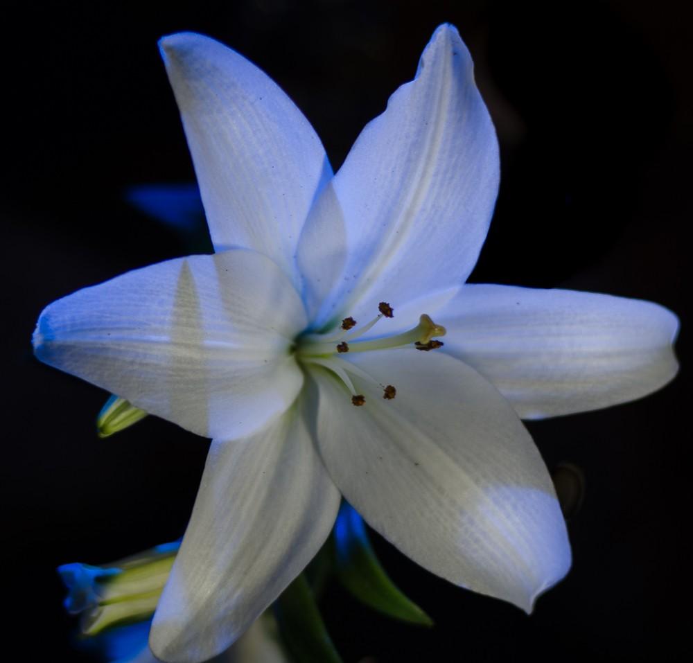 Speedlit Lily-1-5.jpg