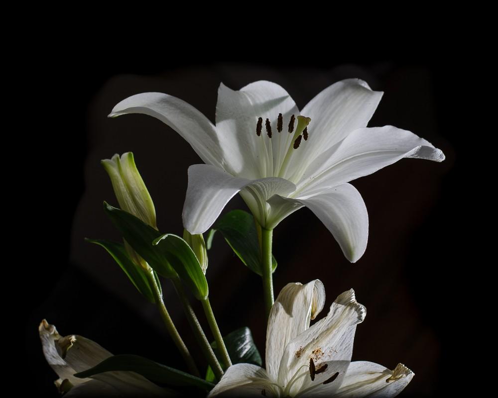 Speedlit Lily-1.jpg