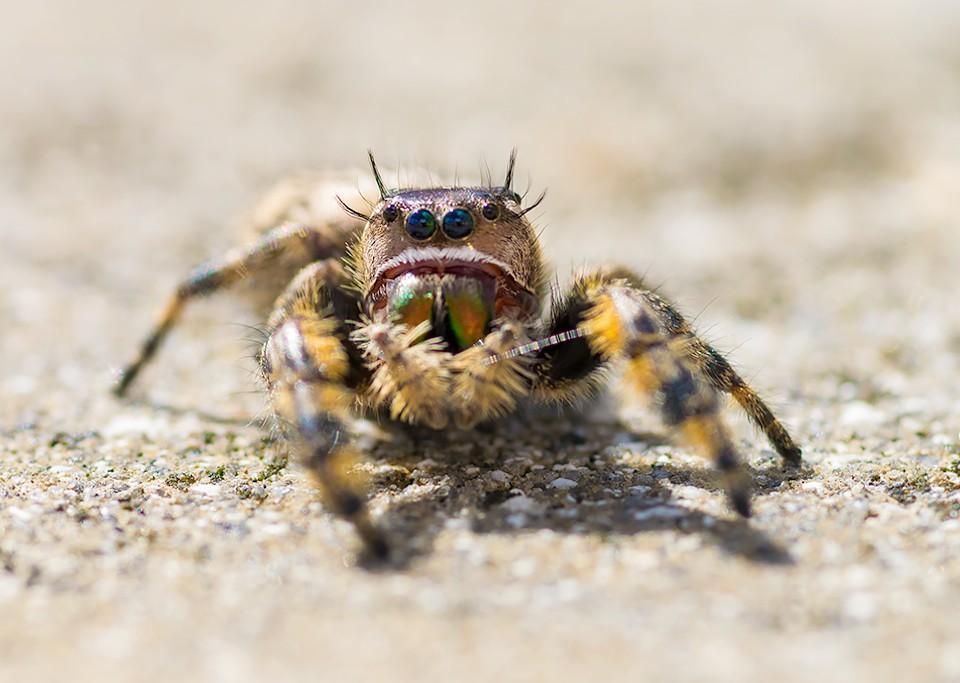Spider-1-35.jpg