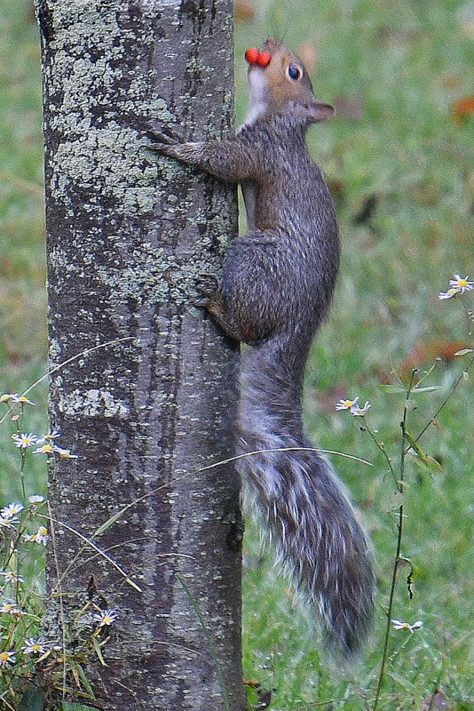 squirrel 002-002.JPG