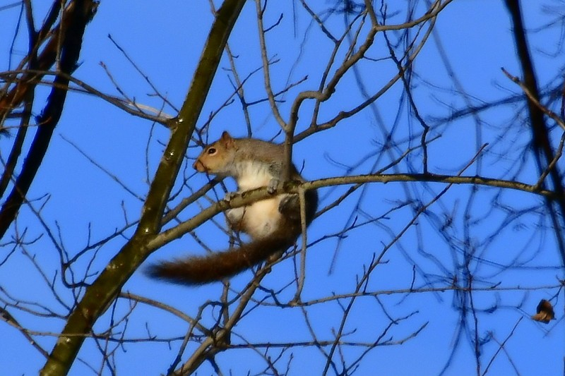 squirrel 037-001.JPG
