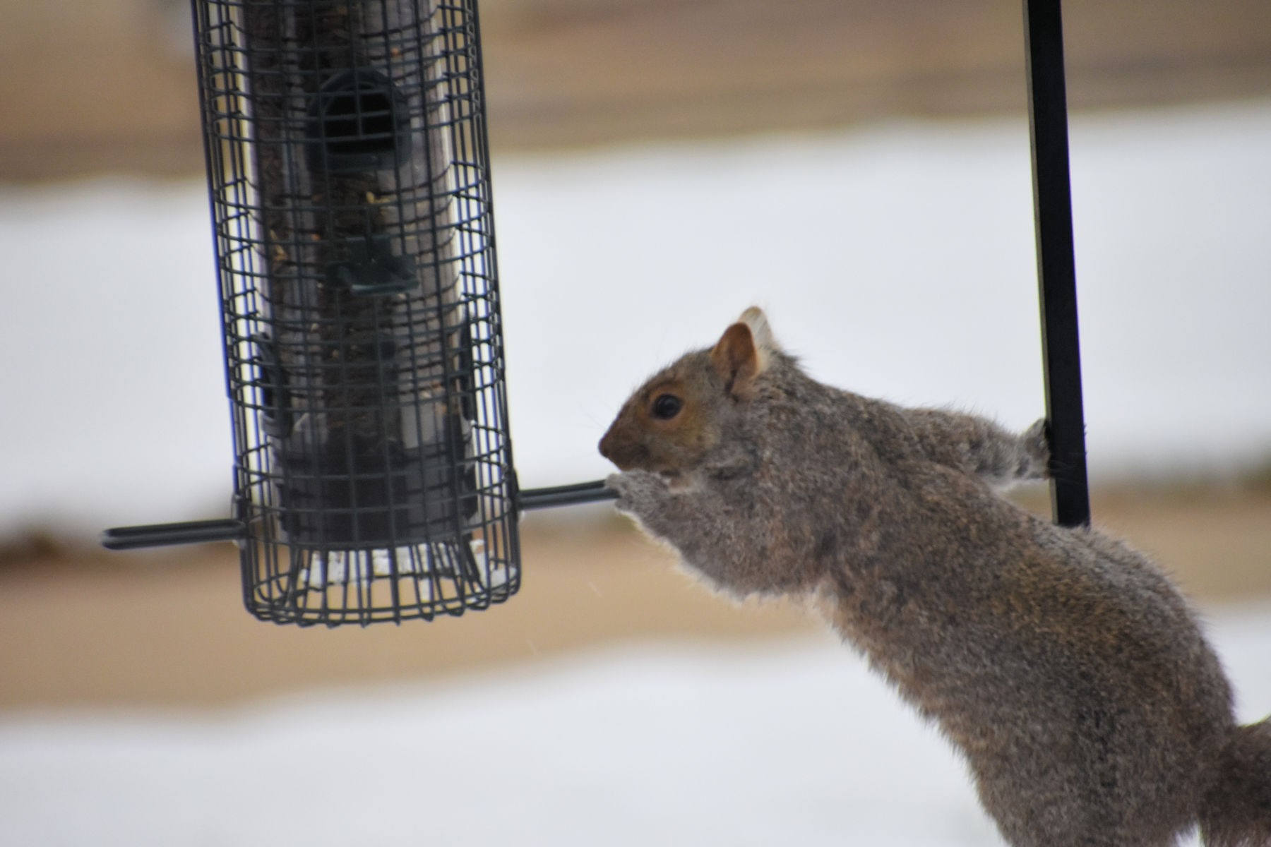 squirrel0868.jpg