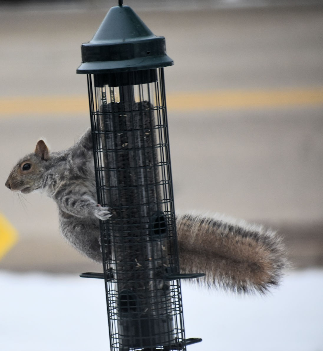 squirrel0879.jpg