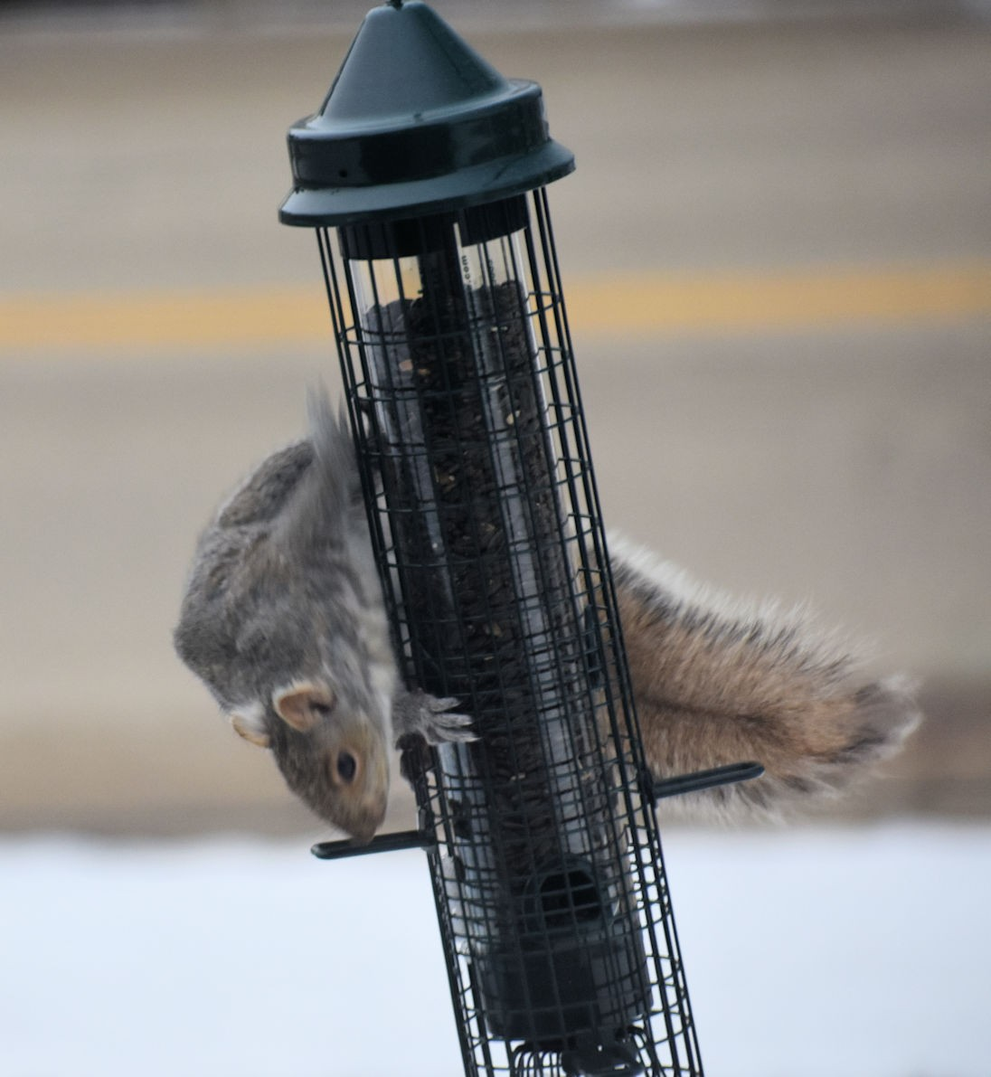 squirrel0880.jpg