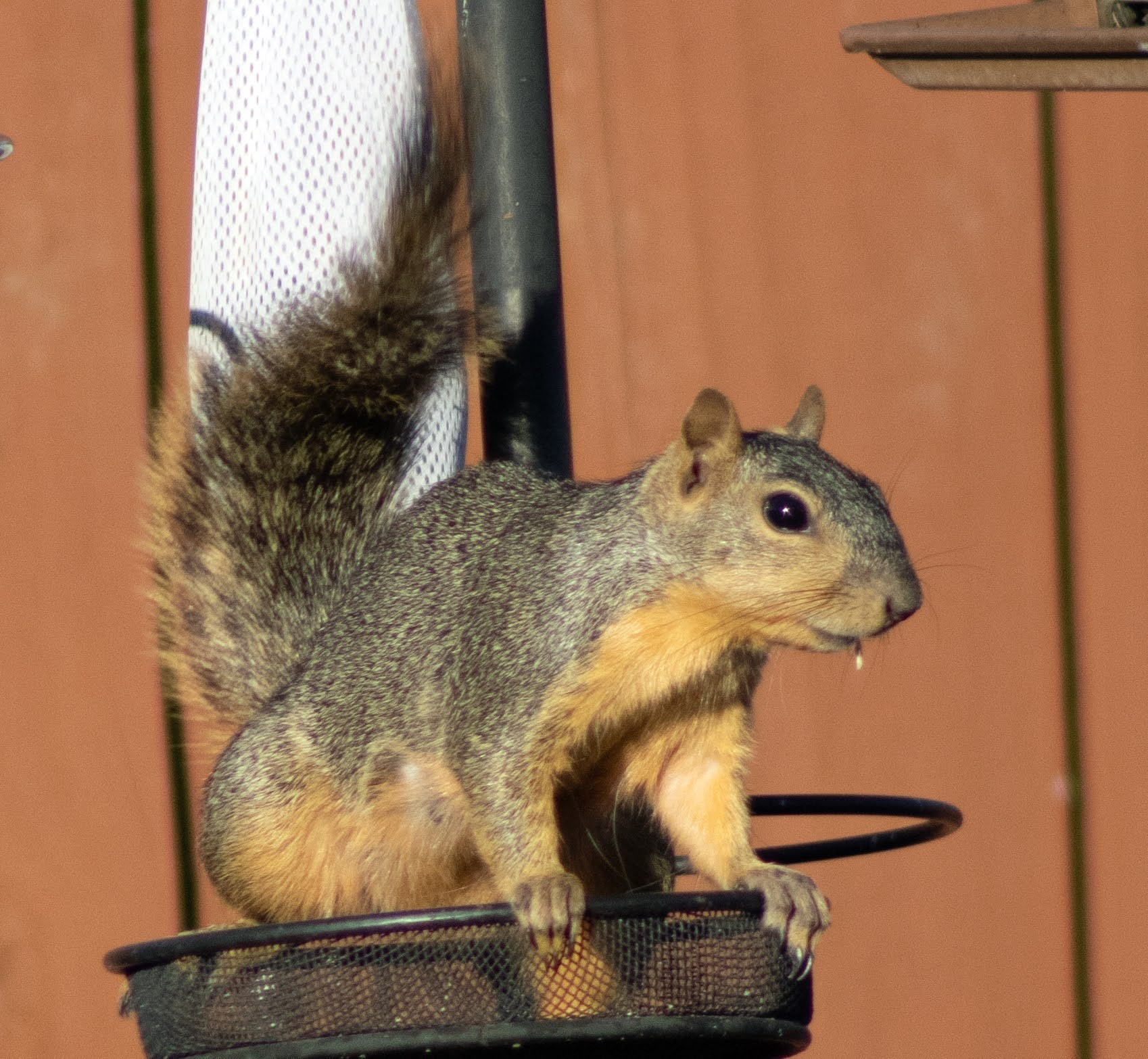 SquirrelOnFeeder03_Original.jpg