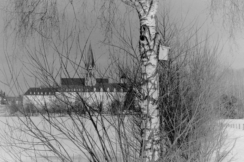 St.O Tree.jpg
