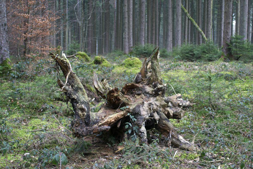 Stump 1.jpg