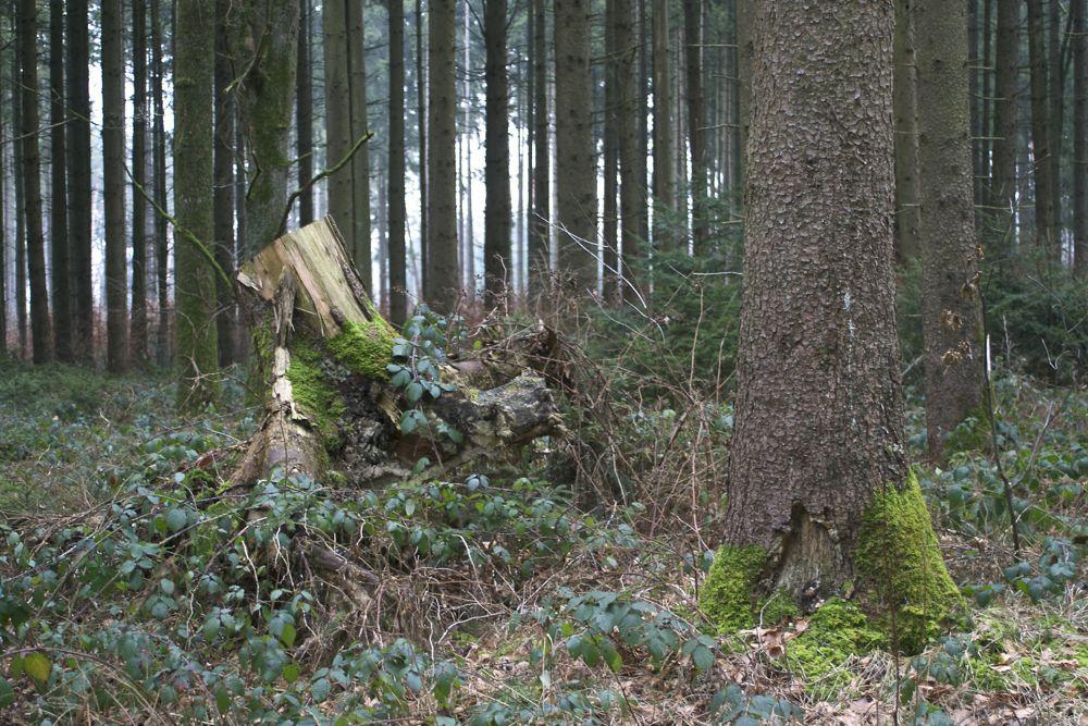 Stump 4.jpg