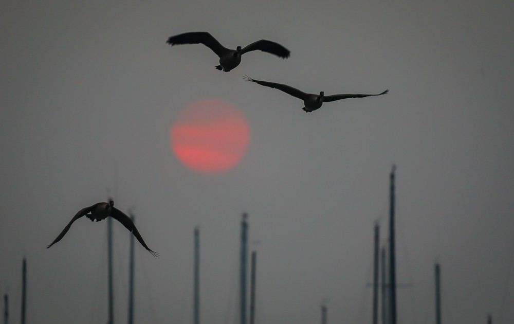 Sunrise With Geese (1 of 1).jpg