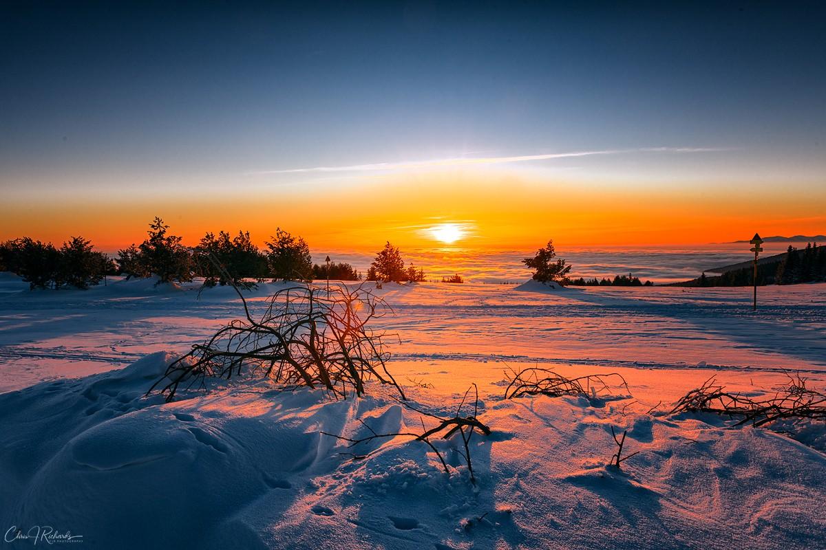 Sunrise_Trees.jpg