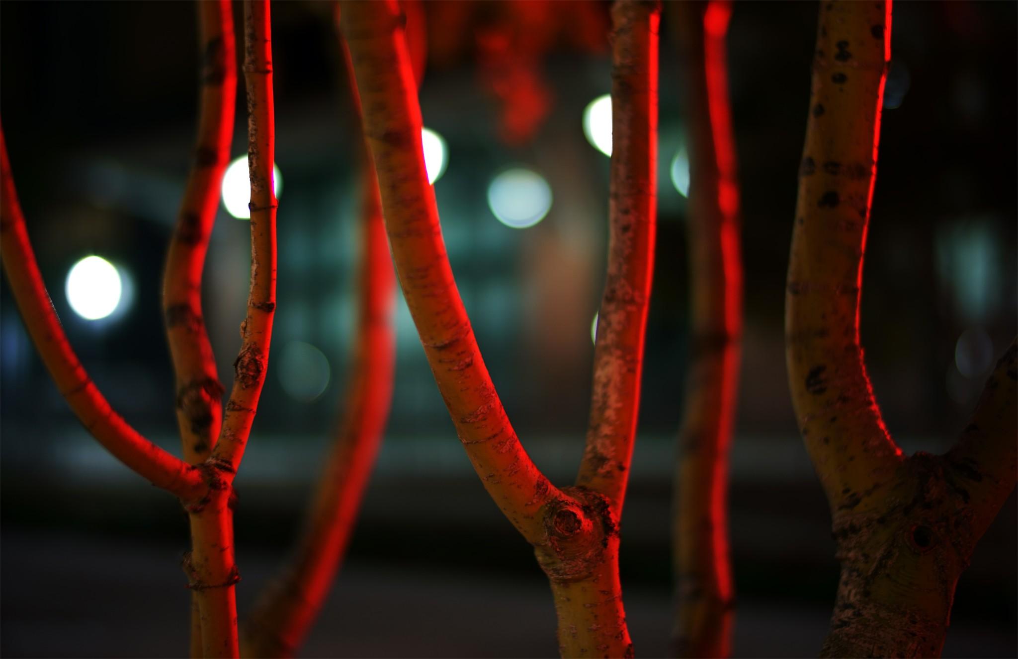 TAC UWT Red Trees med.jpg