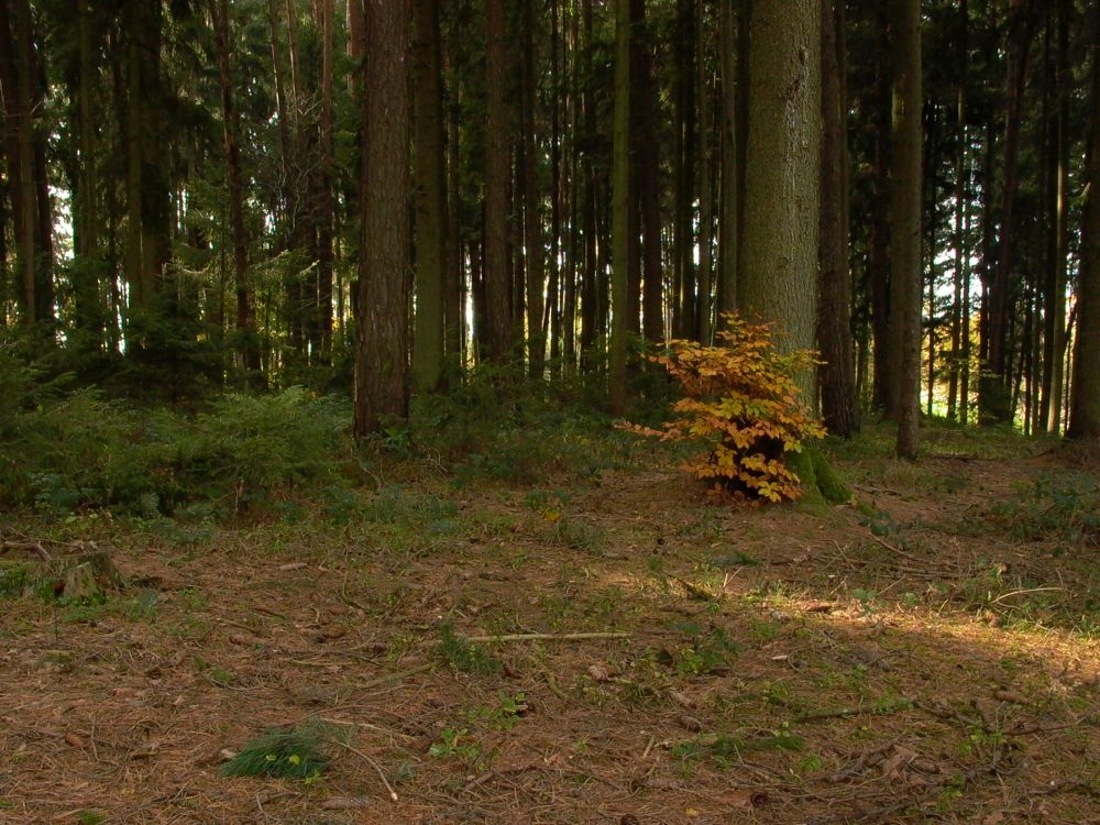 take two woods near Fuchsloch.jpg