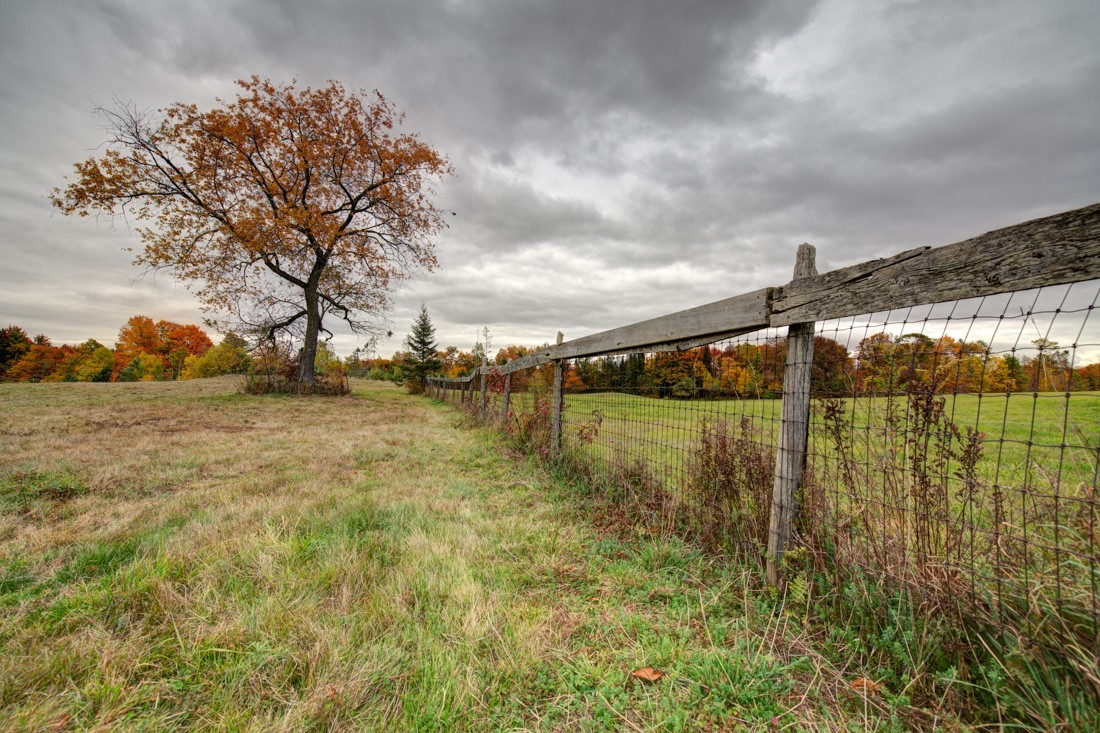 talbots fence and cherry tree in autumn 3.jpg