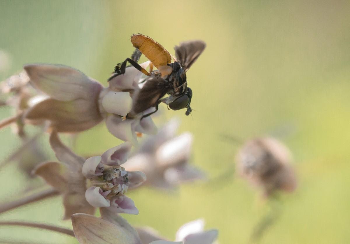 Tiny Fly in Pastel .jpg