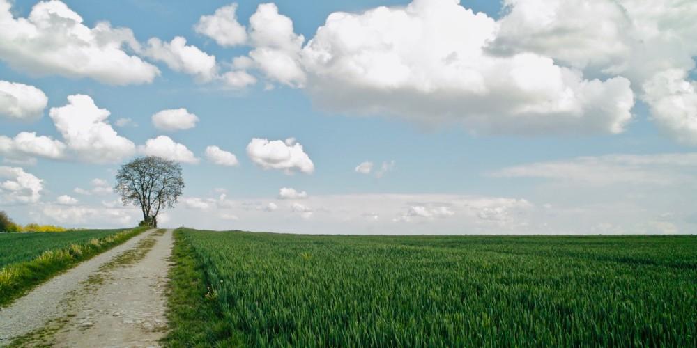tree and path - 1.jpg