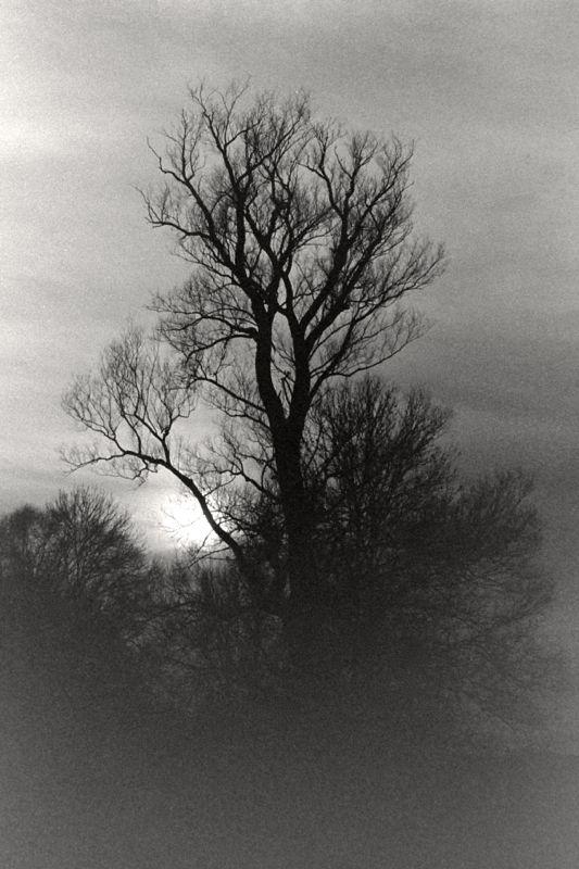 tree at rederzhausen.jpg