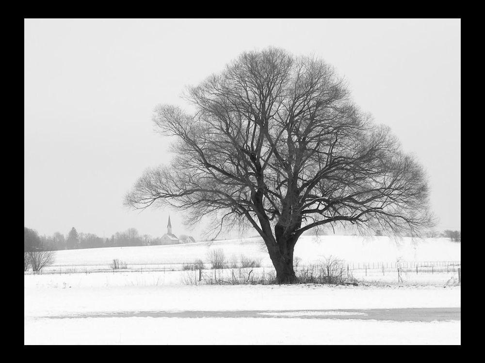 tree & church frame.jpg