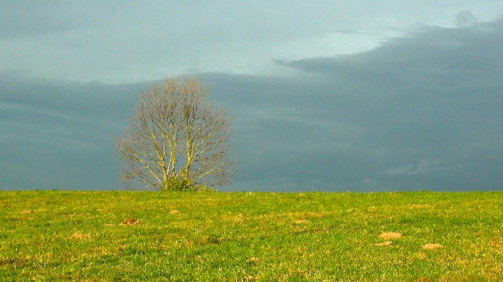 tree field sky.jpg