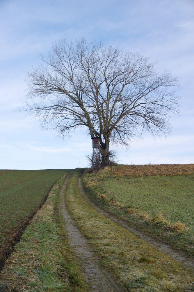 tree & jägersitz.jpg