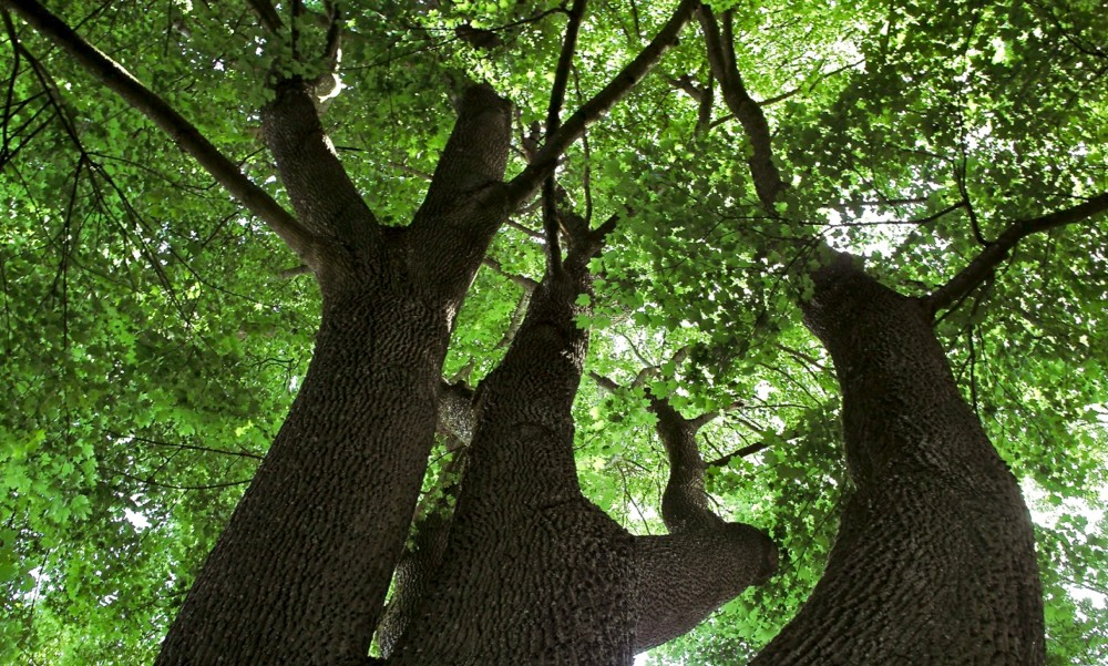 tree looking up - 1.jpg