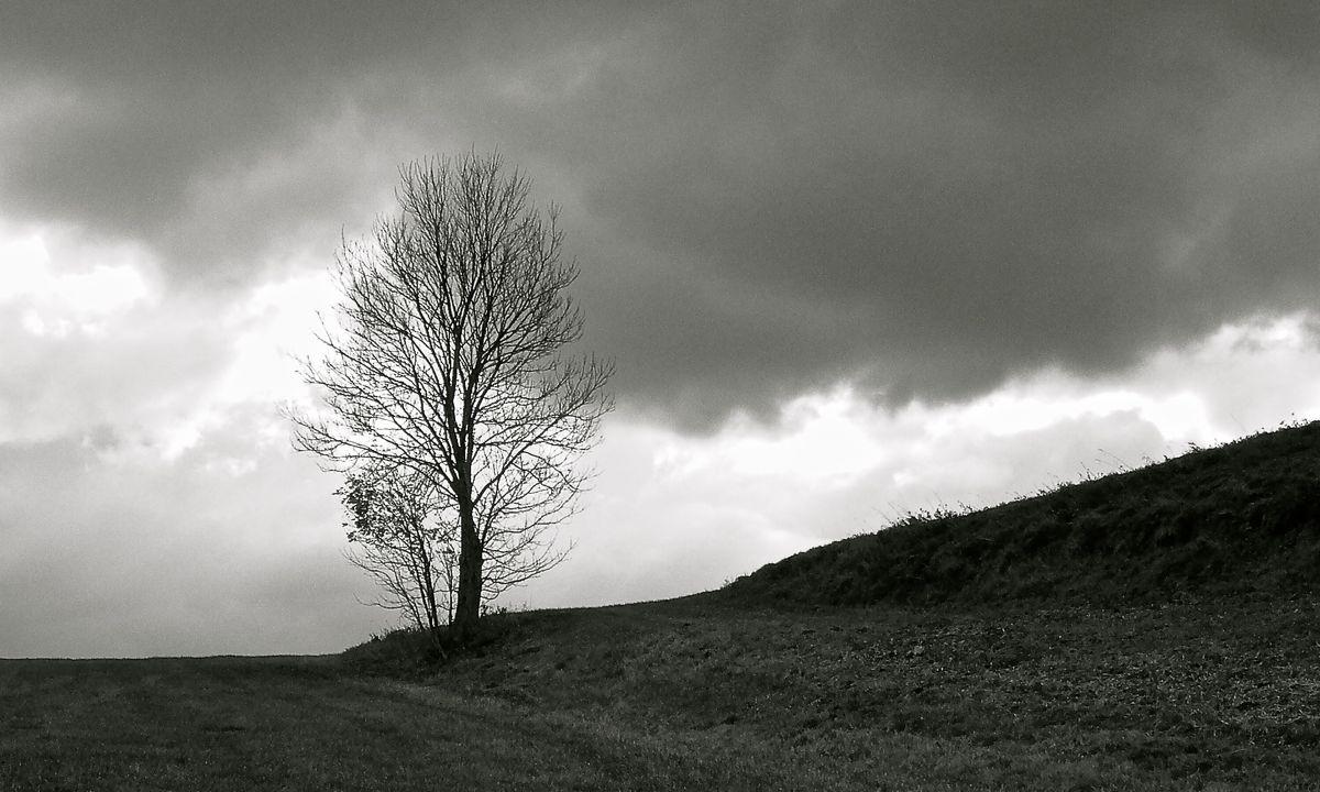 tree on ridge.jpg
