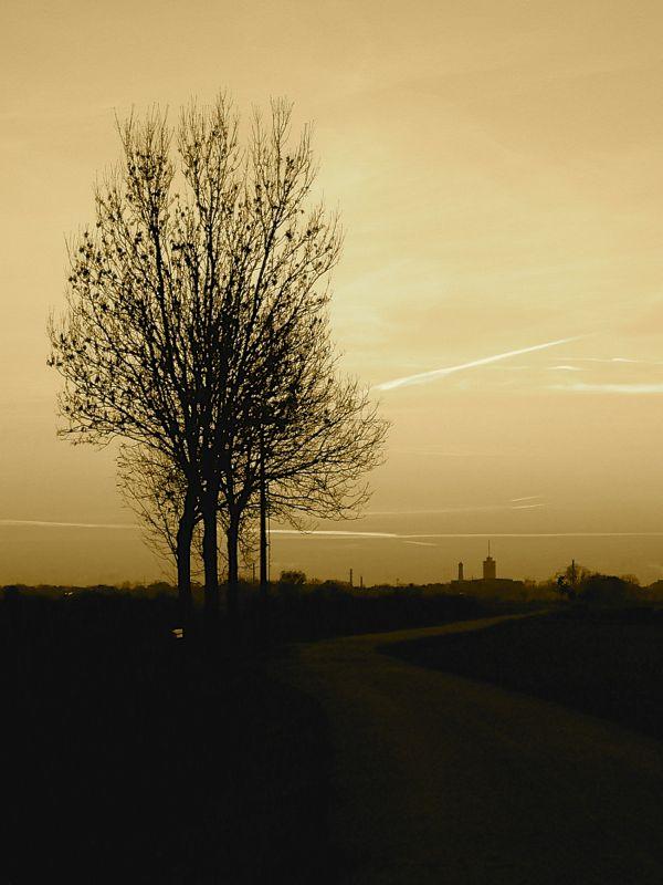 tree road tower.jpg