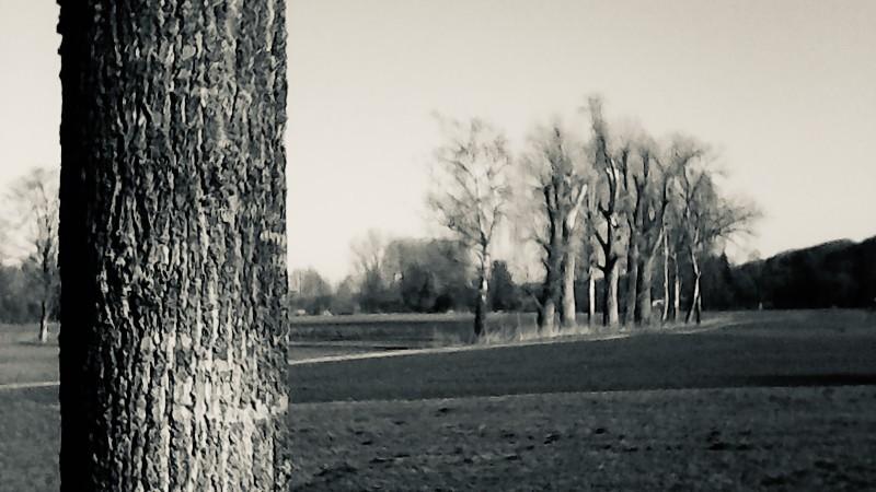 tree & trees - 1 (1).jpg