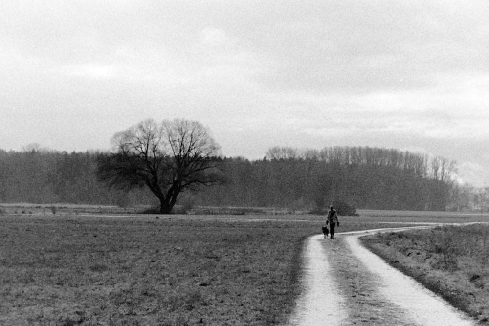 tree walker dog rh.jpg
