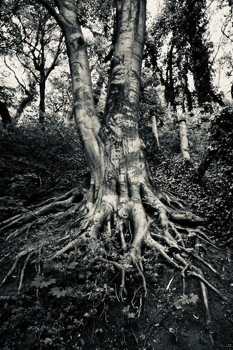 tree with roots 2 - 1.jpg